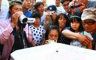 蜘蛛の闘いで老若男女が本気で盛り上がる