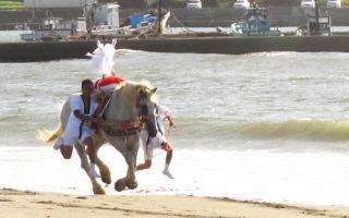 海岸を走る白馬とそれを抑えて走る大人を見る