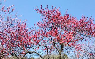 観光ブックにも載らない穴場的な桃畑を発見する
